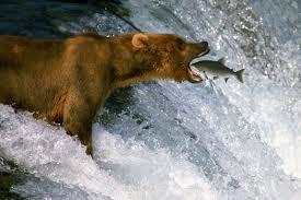Bear days
